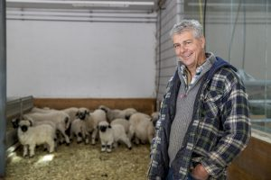 Farmer Paul Julen knows every single black nose sheep of his farm in Zermatt.