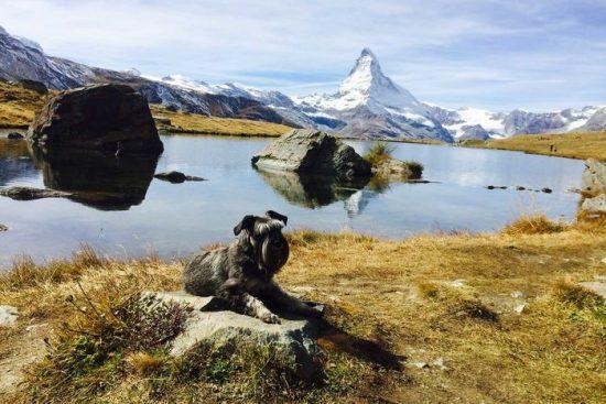 Genusswanderung am Stellisee in Zermatt