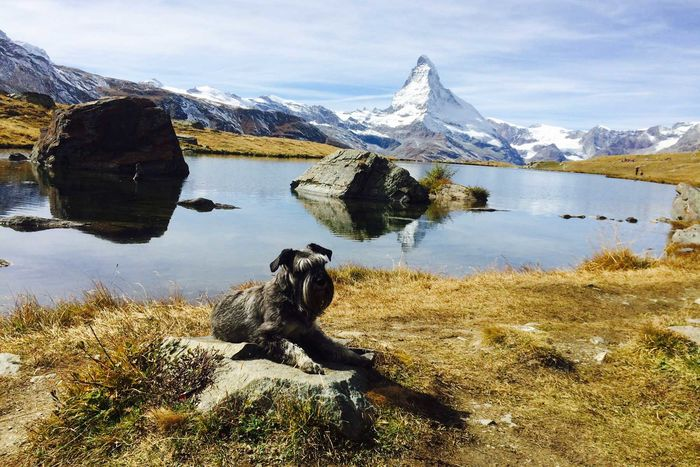 Genusswanderung am Stellisee in Zermatt