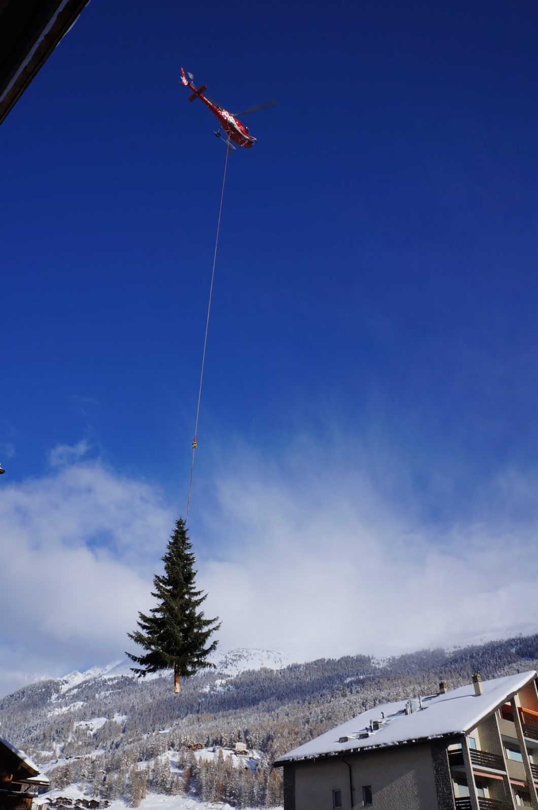 Zermatter Weihnachtsbaum wird mithilfe von Helikopter aufgestellt