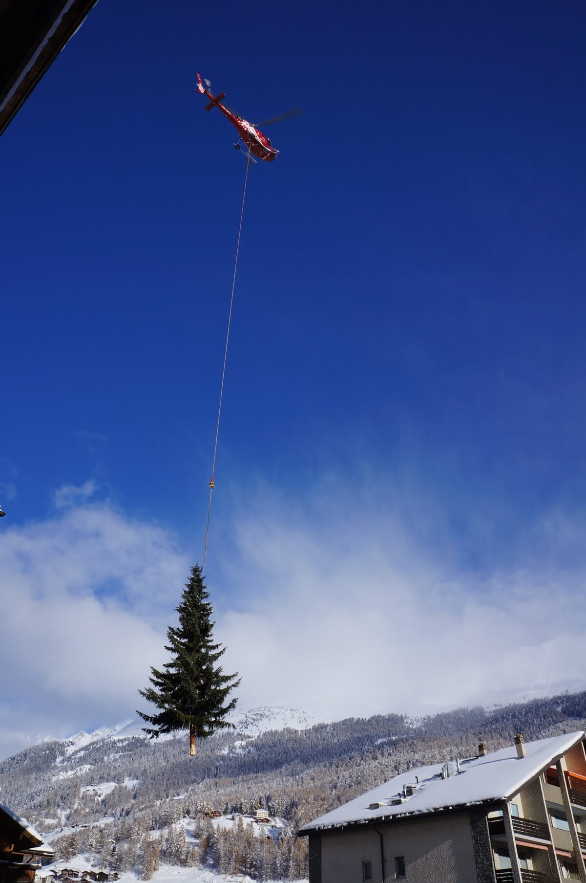 Das Tannenbaum.Oh Tannenbaum Einweihungsfest Des Weihnachtsbaumes In Zermatt