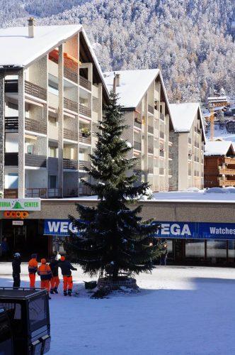 Aufstellung des Weihnachtsbaumes in Zermatt
