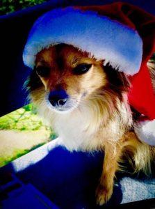 Dan Daniell, Hund, Wuschel, Weihnachten
