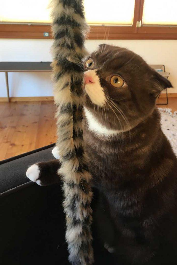 Katze beim Kratzbaum