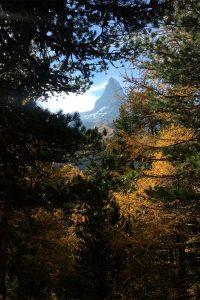 Sicht durch Bäume auf Matterhorn