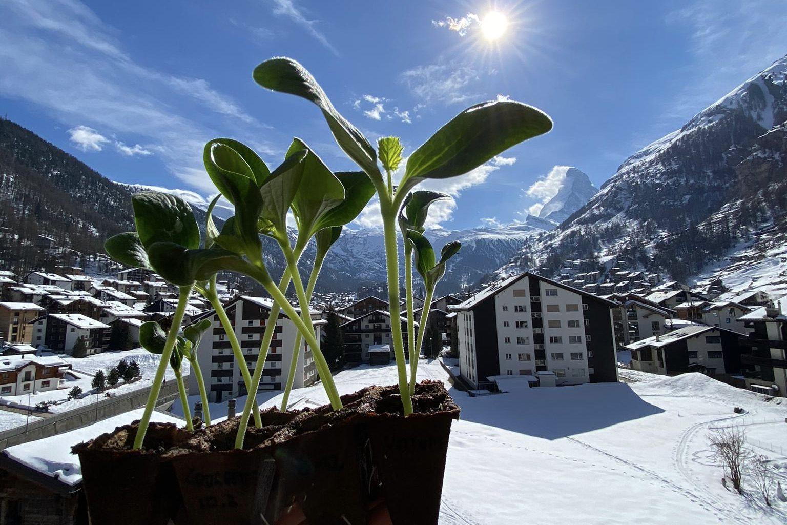 Zermatt Manud Wein